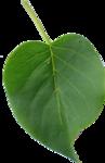 kimla_WFTS_leaf2.png