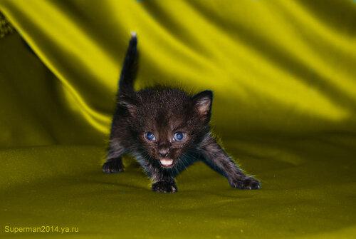 Котята в ДОБРЫЕ РУКИ!!!!