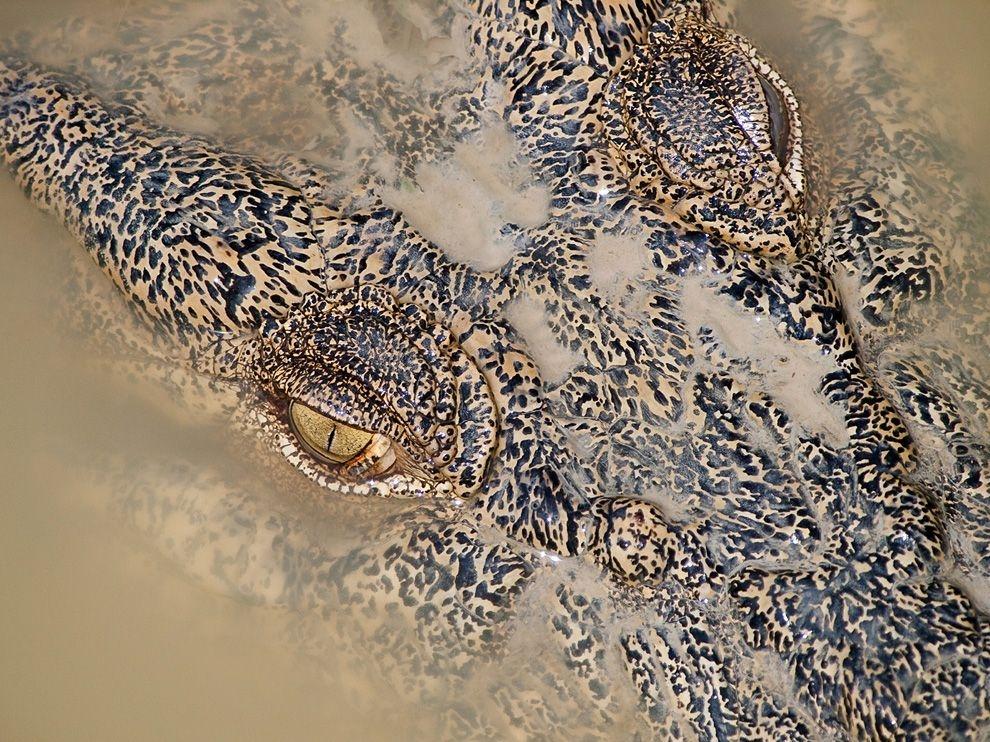 Лучшие фотографии за июнь от National Geographic (2012)
