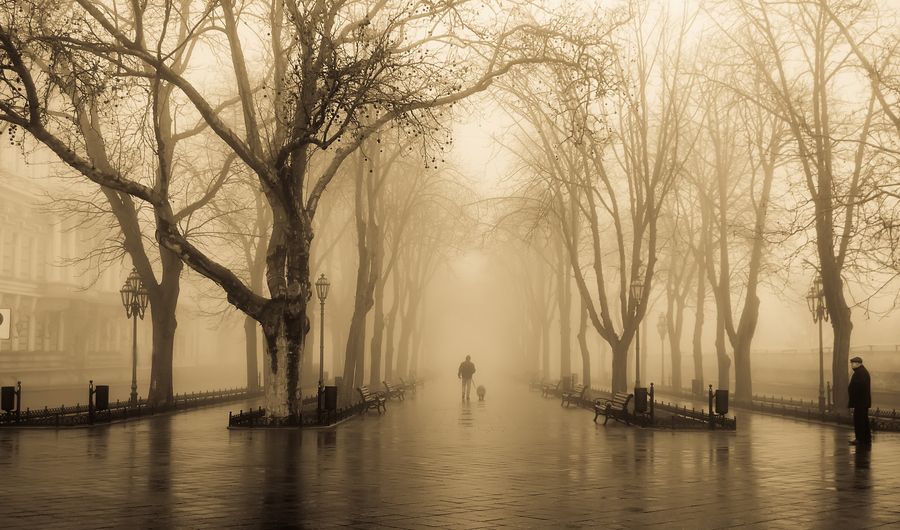 Яркий мир фотографа Владимира Никулина
