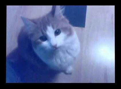 Видео прикол - кот навевает пробку от бутыли.