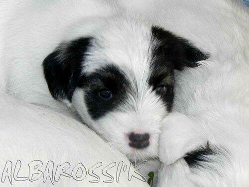 http://img-fotki.yandex.ru/get/6503/10248733.16/0_b8b40_9b8b2ea8_L.jpg