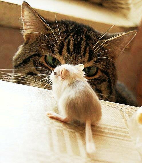 """Вышивка крестом.  Оригинал.  Схемы автора  """"natbor """".  Схема вышивки  """"Кошки мышки """".  Для вышивания мелких мотивов..."""