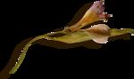 kimla_DN_flower2_sh.png