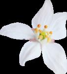 kimla_WFTS_flower2.png