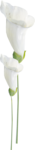 kimla_WFTS_flower6.png