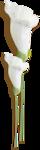 kimla_WFTS_flower6_sh.png