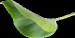 kimla_WFTS_leaf1.png