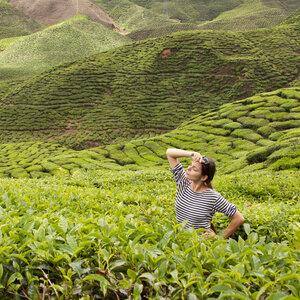 На чайных плантациях в Малайзии