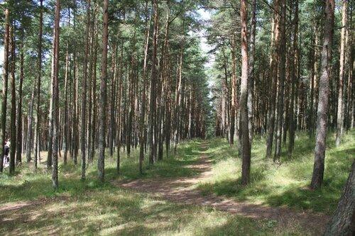 тропы в лесу