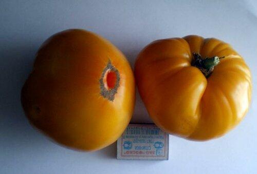 Закладываем богатый урожай томатов