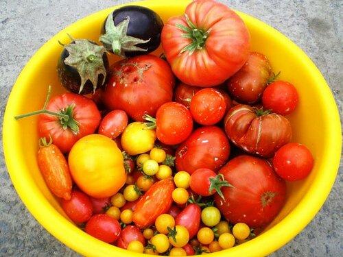 Мой урожай 2012 как всегда - хорош, несмотря на ужасную жару