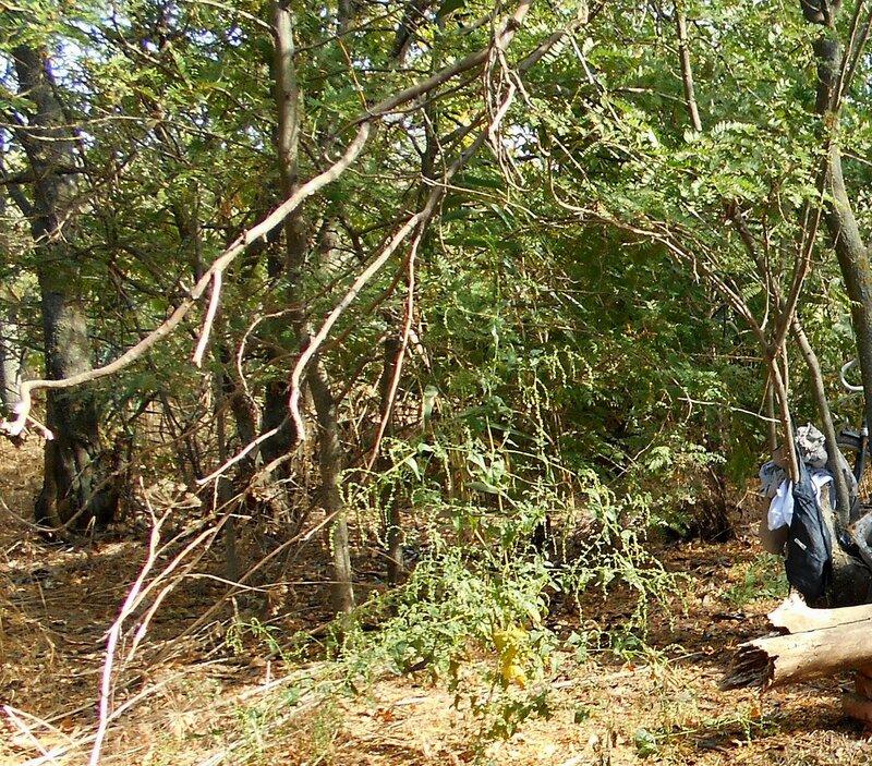 В лесу ... DSCN1401 - 1.JPG