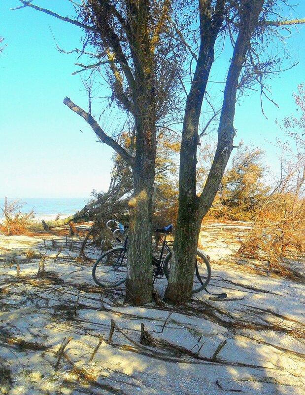 У дерева ... SAM_3943.JPG