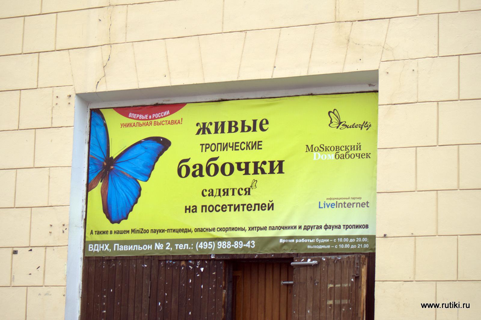 Ручные бабочки