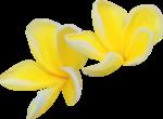 NLD SATSP Flower Bis.png