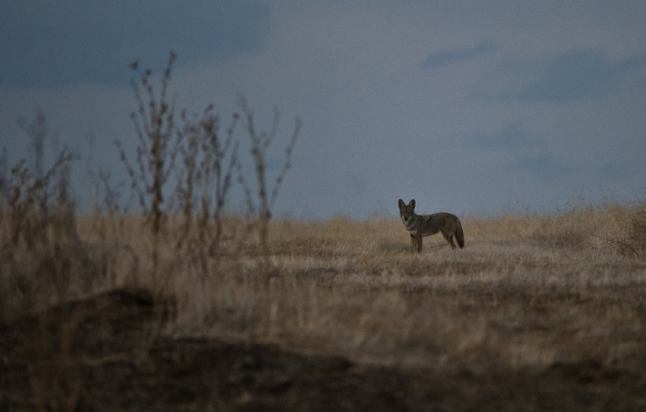 Животный мир. Фотограф Mukul Soman