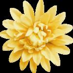Lilas_Old-Garden_elmt (64).PNG