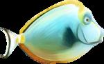 NLD Fish 2.png
