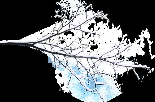 заснеженные ветки