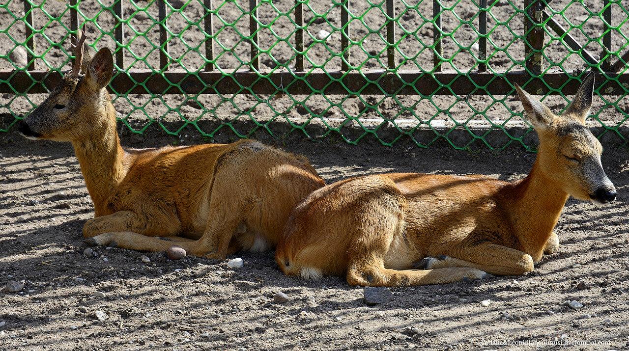 Гродненский зоопарк. Беларусь