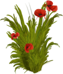 priss_Birthday_bushpoppy.png