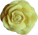 priss_Birthday_fabricrose2.png