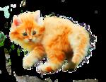 «Рыжий котенок» 0_8c6bd_e8c667f3_S