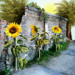 «AD_Sunflower_summer»  0_8c75d_861fd5f4_S