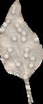 cvd inner storm salvia leaf 3.png