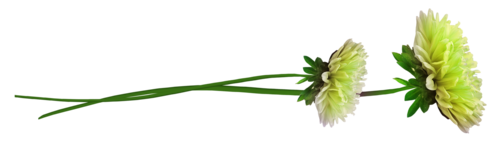 «Florjuscrap_Green_Madness»  0_8ff67_75b0f91_L