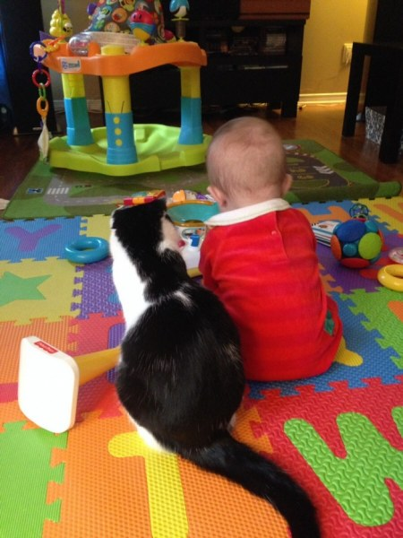 Невероятно заботливые кошки