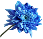 Grace's_TLC_Blue_Flower.png