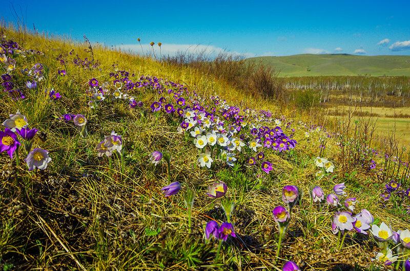 Растительность Хакасии