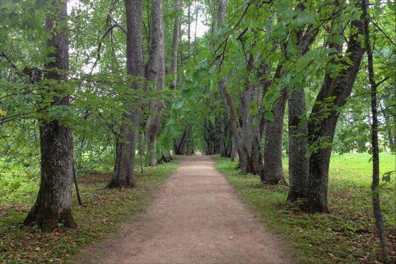 Пушкинские горы, Петровское, Аллея в парке