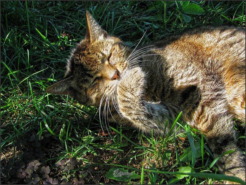 Солнечный котёна