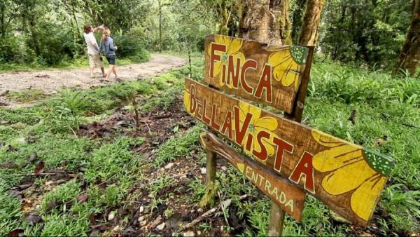 Супруги из Колорадо построили в Коста-Рике удивительную деревню с домами на деревьях