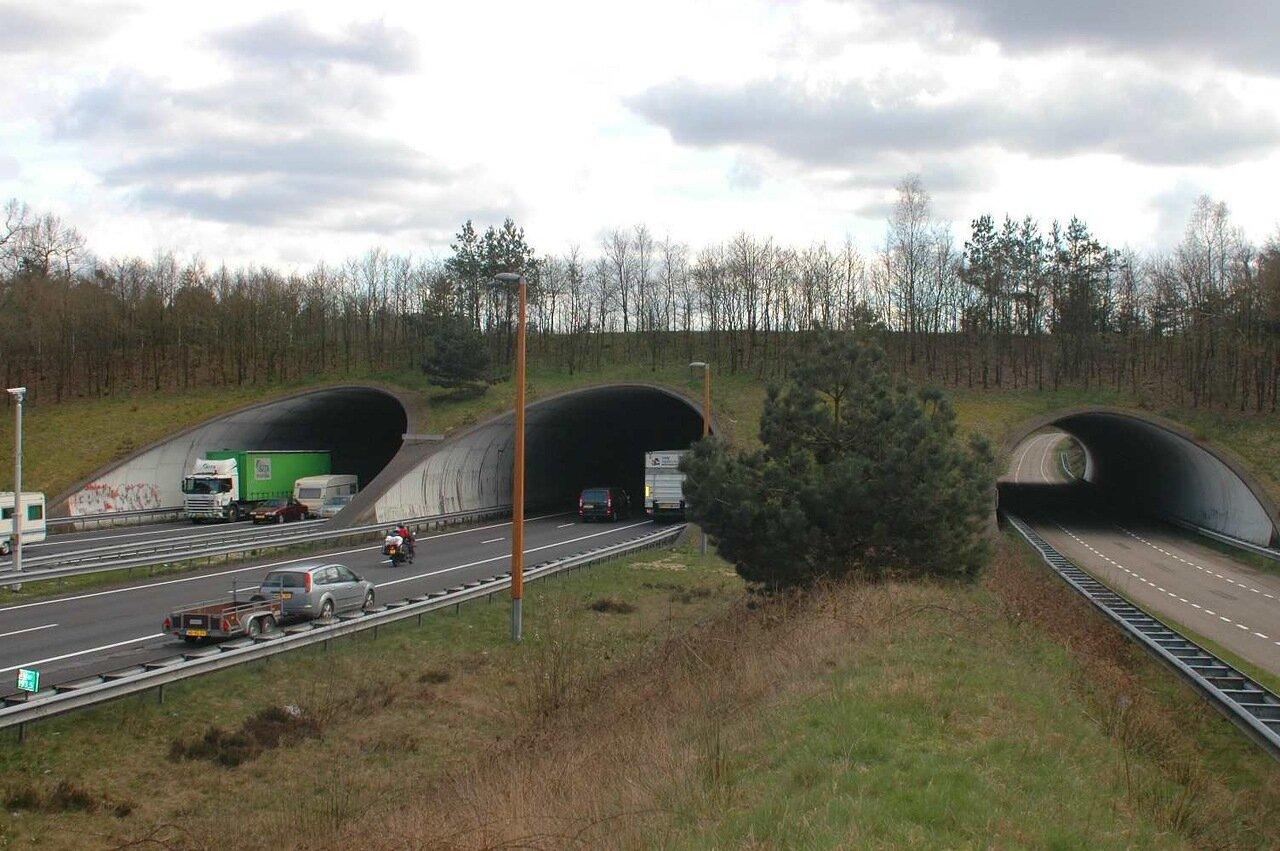 Ecoduct - мост для дикой природы