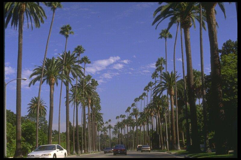 Аллея пальм у дороги Достопримечательности США Америка Пейзажи МИР ФОТО.