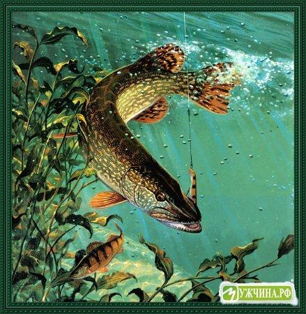 Оригинальный диск содержит авторские фильмы А. Название: Рыбалка.  Жизнь щуки Мир подводной охоты Год выхода...