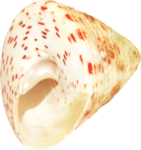 NLD Shell 14.png