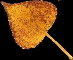 AutumnMelody_by GalinaV_el (46).png