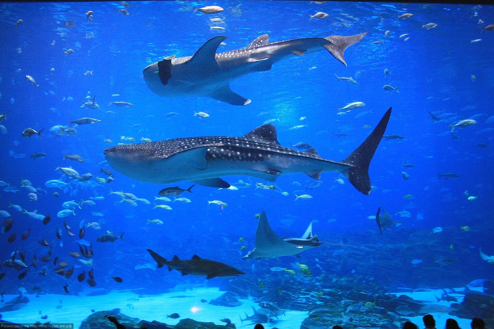 океанариумы мира с фото минусов имеем
