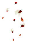 StarLightDesigns_AutumnSunshine_elements (88).png