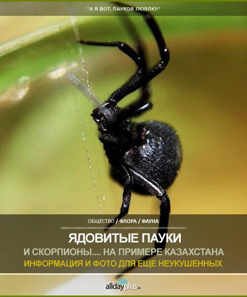 Ядовитые пауки и прочаю жуть. Информация и фото. На примере республики Казахстан. 30 фото.