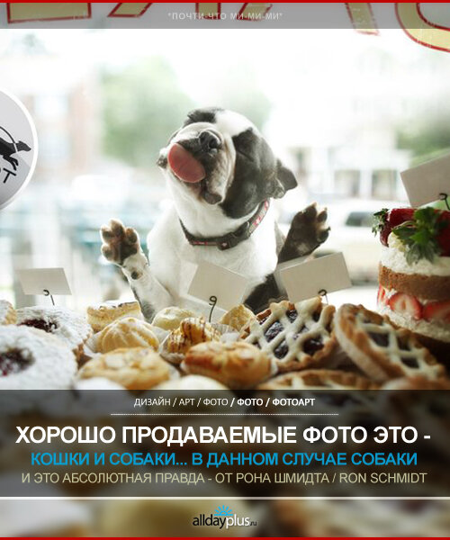Хорошо продаваемые фотографии Рона Шмидта. Ron Schmidt и его собачки. 20 шт.