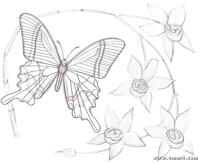 Картинки бабочек и цветов раскраски 2