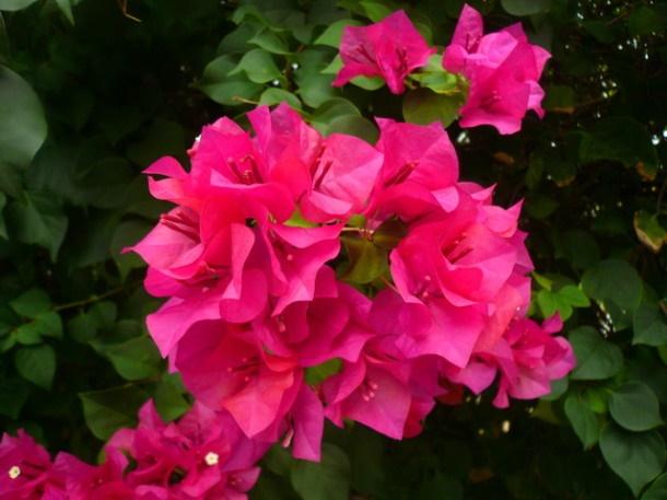 Цветы Таиланда 0 141ae5 3595789f orig
