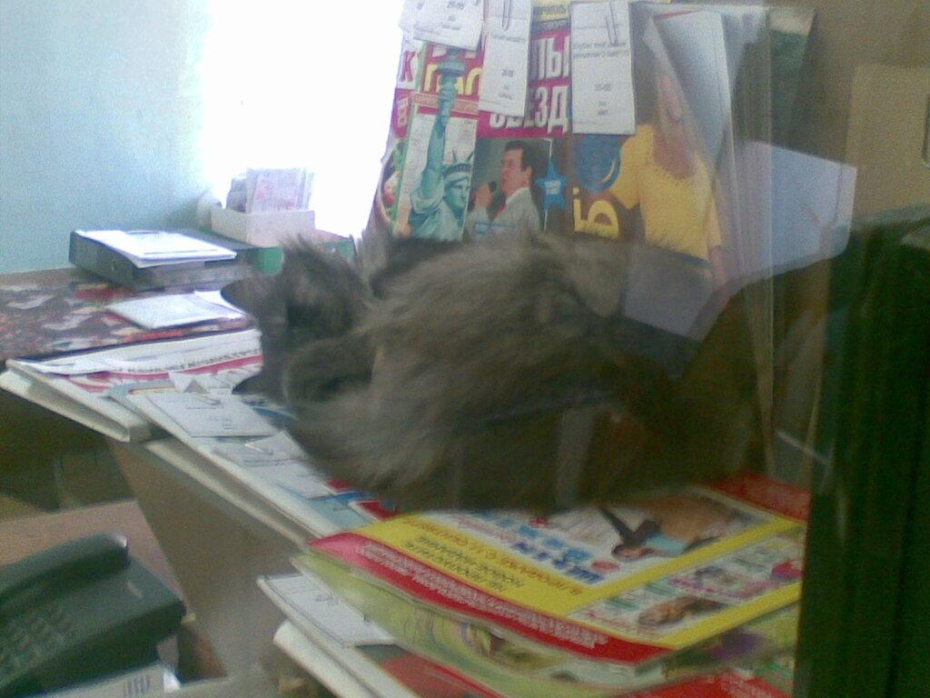Почтовый кот. Город Златоуст