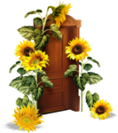 «AD_Sunflower_summer»  0_8c765_1b087359_S